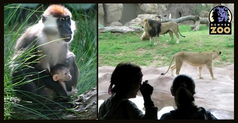 $4 for child admission to the Denver Zoo (ages 3-11) $8 Value