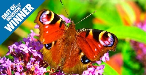 $8 for 2 tickets to the Butterfly Center at Houston Museum of Natural Science