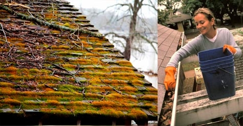 $125 for gutter cleaning or moss removal service from A and A Island Services