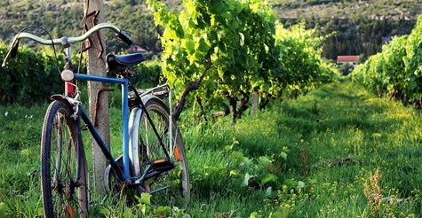$119 for a 5-hour guided vineyard bike tour and wine tasting from Vintage Bike Tours