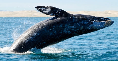$15 for a whale watching tour from Newport Landing