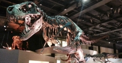 $14 Tickets to Houston Museum of Natural Science